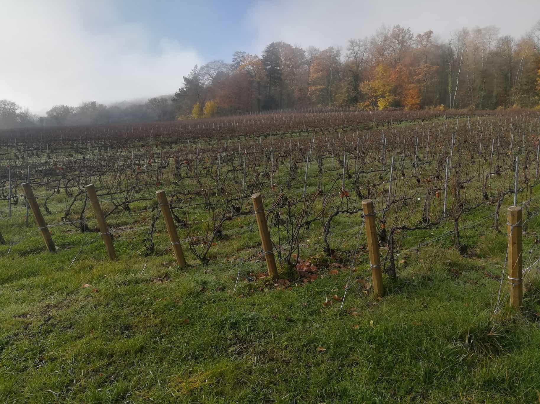 オーヴィレール(Hautvillers)葡萄畑